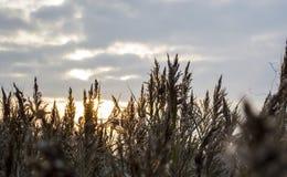 Feld unter dem Himmel Stockfotografie