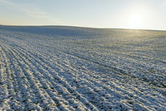 Feld unter Schnee. Stockfoto