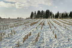 Feld unter Schnee. Lizenzfreie Stockbilder