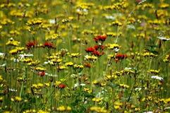Feld voll der Blumen Stockfotos