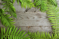 Feld vom Farn verlässt auf altem unbemaltem hölzernem Hintergrund mit c Stockfoto