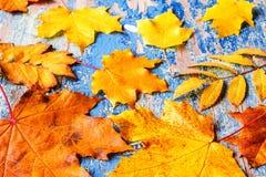 Feld vom klaren bunten Herbstlaub auf dem hölzernen cyan-blauen Schreibtisch des Schmutzes Stockfoto