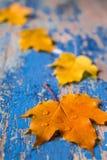 Feld vom klaren bunten Herbstlaub auf dem hölzernen cyan-blauen Schreibtisch des Schmutzes Stockfotografie