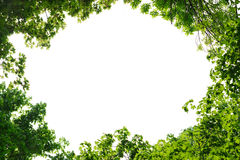 Feld von Ahorn- und Ulmenblättern Stockbilder