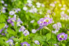 Feld von blühenden Blumen oder von Gras, Waldwiesen-Makrobild dep Lizenzfreies Stockfoto