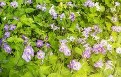 Feld von blühenden Blumen oder von Gras, Waldwiesen-Makrobild dep Lizenzfreie Stockfotografie