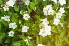 Feld von blühenden Blumen oder von Gras, Waldwiesen-Makrobild dep Stockfotos