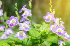 Feld von blühenden Blumen oder von Gras, Waldwiesen-Makrobild dep Stockfotografie