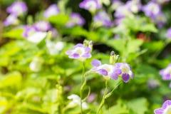 Feld von blühenden Blumen oder von Gras, Waldwiesen-Makrobild dep Stockfoto
