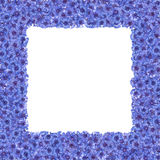 Feld von blühenden Kornblumen Grenze von blauen Blumen Knapweeds lokalisierte Blauer blühender Rahmen Stockbild