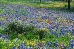Feld von Bluebonnets und von Malerpinsel Stockfoto