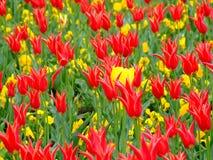 Feld von Blumen 2 Stockbild