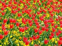 Feld von Blumen 3 Stockbilder