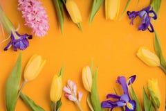 Feld von Blumen auf einem gelben Hintergrund Stockfotos