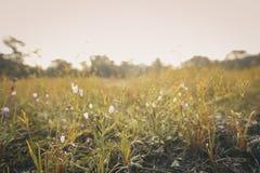 Feld von Blumen morgens stockfotos