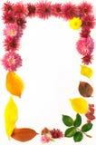 Feld von Blumen und von Blättern Stockfoto