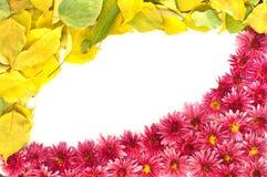 Feld von Blumen und von Blättern Lizenzfreie Stockfotografie