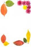 Feld von Blumen und von Blättern Stockfotografie