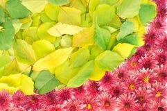 Feld von Blumen und von Blättern Stockfotos