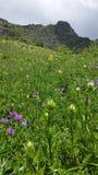Feld von bunten Blumen und von Hügel im Hintergrund, oberes Svaneti, Georgia stockfoto