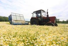 Feld von colorField des bunten Gänseblümchens mit Ackerschlepper im backgroundful Gänseblümchen mit aus Fokusackerschlepper im ba Lizenzfreies Stockbild