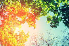 Feld von den Baumbrunchs Lizenzfreie Stockfotos