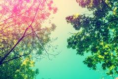 Feld von den Baumbrunchs Stockbild