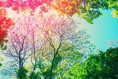 Feld von den Baumbrunchs mit Lichteffekt Lizenzfreies Stockbild