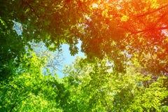 Feld von den Baumbrunchs am sonnigen Tag Lizenzfreie Stockfotografie