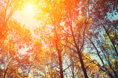 Feld von den Baumbrunchs am sonnigen Tag Lizenzfreie Stockbilder
