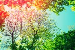 Feld von den Baumbrunchs vor dem blauen Himmel Stockfotografie