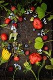 Feld von den Beeren und von den Blumen Stockfotos