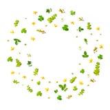 Feld von den Grünblättern und -blume auf weißem Hintergrund für lokalisiert Stockbild