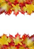 Feld von den Herbst-Ahornblättern Lizenzfreie Stockfotos