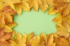 Feld von den Herbstblättern Lizenzfreie Stockfotografie