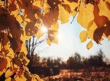 Feld von den Herbstblättern Stockbilder