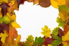 Feld von den Herbstblättern Stockfotografie