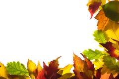 Feld von den Herbstblättern Stockfoto