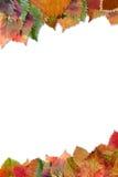 Feld von den Herbstblättern mit Schatten Lizenzfreie Stockbilder