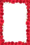 Feld von den roten Rosen. Stockbilder