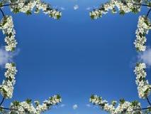 Feld von der weißen Farbe auf blauem Himmel des Hintergrundes Lizenzfreies Stockfoto