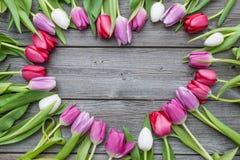 Feld von frischen Tulpen Stockfotografie