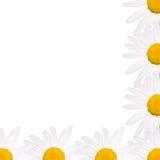 Feld von Gänseblümchen Lizenzfreie Stockfotos