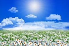 Feld von Gänseblümchenblumen und -wolken auf dem klaren blauen Himmel Stockfotos