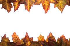 Feld von gefallenen Blättern mit Platz für Ihren Text Stockbilder