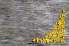 Feld von gelben Blumen auf einem hölzernen Hintergrund Stockfotografie
