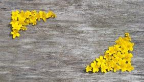 Feld von gelben Blumen auf einem hölzernen Hintergrund Stockbild