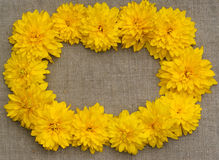 Feld von gelben Blumen gegen einen Hintergrund des rauen Stoffes Stockfotografie