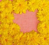 Feld von gelben Blumen gegen einen Hintergrund des rosa Stoffes Lizenzfreie Stockfotos