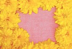 Feld von gelben Blumen gegen einen Hintergrund des rosa Stoffes Lizenzfreies Stockfoto
